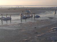 Zarembówka.pl – plaża w Jastarni
